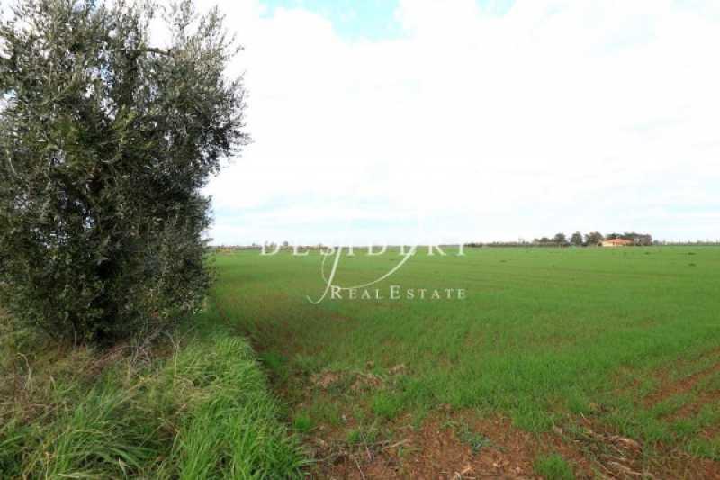 terreno agricolo periferia foto1-98102470