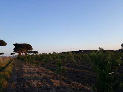 Terreno in Vendita a Giugliano in Campania via San Francesco a Patria