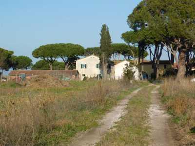 Azienda Agricola in Vendita a Grosseto principina terra