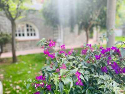 Villa in Affitto ad Ischia via Dell