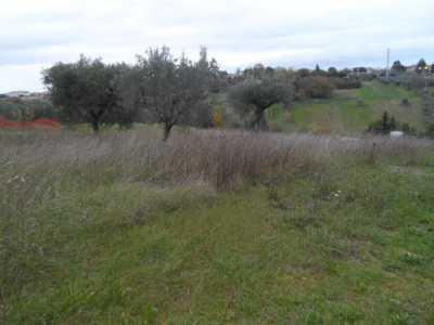 Terreno in Vendita a Castel di Lama Zona Piattoni Piattoni