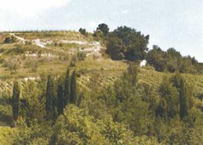 Azienda Agricola in Vendita a San Miniato Bucciano