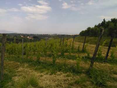 Azienda Agricola in Vendita a San Miniato Cusignano
