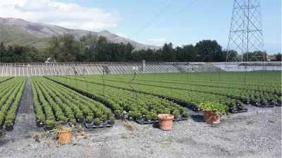 Azienda Agricola in Vendita ad Albenga