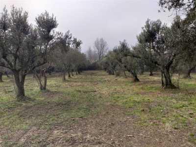 Terreno agricolo in Vendita a Ruviano san domenico