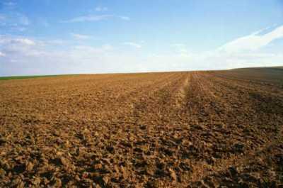 Terreno Agricolo in Vendita ad Altamura