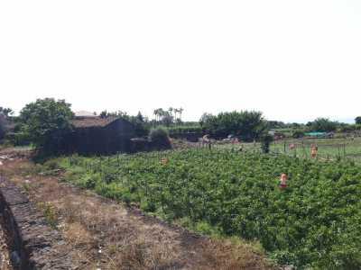 Azienda Agricola in Vendita ad Acireale Capomulini
