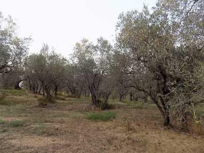 Terreno edificabile in Vendita a Cecina