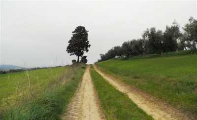 Azienda Agricola in Vendita a Rosignano Marittimo