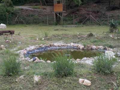 terreno agricolo in vendita a camaiore camaiore pontemazzori foto3