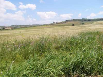 Terreni agricoli in vendita sciacca da maragani - Immobiliare sciacca ...