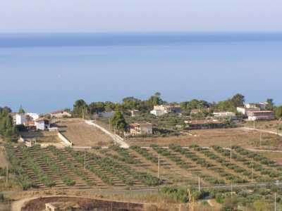 Terreno Agricolo in Vendita a Sciacca San Giorgio