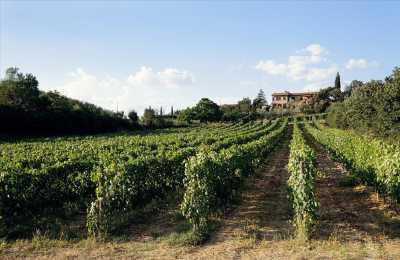 Azienda Agricola in Vendita a Montepulciano
